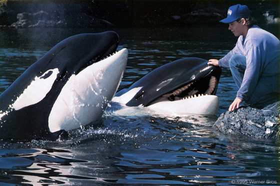 Pics For > Free Willy Animatronic Whale  Free Willy Animatronic Whale