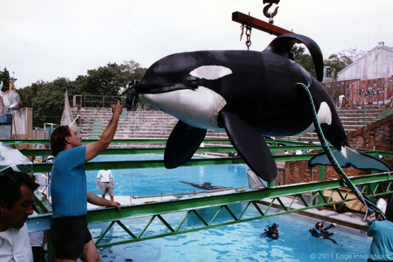 Free Willy  Free Willy Animatronic Whale